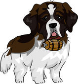 St. Bernard — Stock Photo