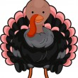 Stock Photo: Turkey Front View