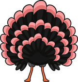 Turkey Back View — Stock Photo