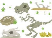 Dinosaur Bones — Stock Photo