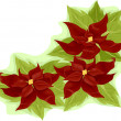 Poinsettia — Stock Photo #19414451