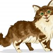Stock Photo: Maine Coon Cat