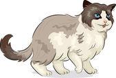 Ragdoll kot — Zdjęcie stockowe