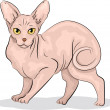sphynx cat — Stock Photo