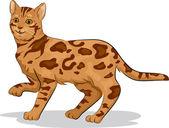 Bengal Cat — Stock Photo