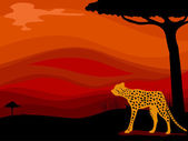 Cheetah Savanna Background — Stock Photo