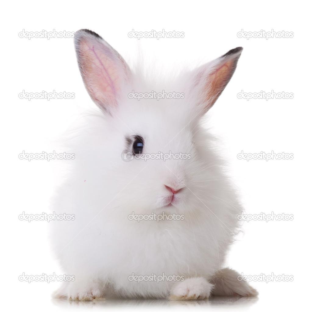 可爱的小白兔在绿色