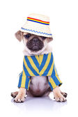 Dog sitting wearing clothes and hat — Stock Photo