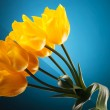 Small bouquet made of beautiful yellow tulips — Stock Photo