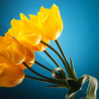 Small bouquet made of beautiful yellow tulips - Stock Photo