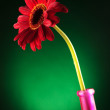 Red gerbera in a vase — Stock Photo #26352761