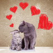 Cats kissing on valentines day — 图库照片