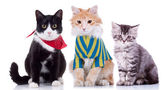 Three curious seated cats  — Zdjęcie stockowe