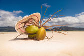 Hat above a bunch of coco nuts on the beach — Stock Photo