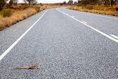 Gecko jaszczurka — Zdjęcie stockowe