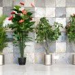 Four potted plants — Stockfoto #12539724