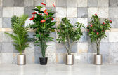 Four potted plants — Stock Photo