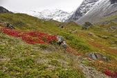 Bergslandskap — Stockfoto
