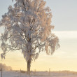 Frosty tree — Foto Stock