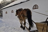 Brown horse with a sled — Stock Photo