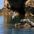 Seagull on the rocks - Stock Photo