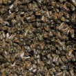 Bees inside the hive — Stock Photo #12316038