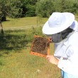Stockfoto: Bee keeper with bee colony