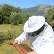 图库照片: Bee keeper with bee colony