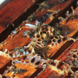 Bees inside the hive — Stock Photo