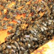 Bees inside the hive  — Stockfoto