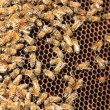 Bees inside the hive — Stock Photo #12316341