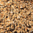 Bees inside the hive - Stock Photo