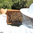 Bee keeper with bee colony — Stock Photo #12316355