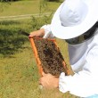 Bee keeper with bee colony — Stock Photo