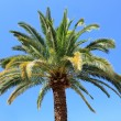 Palm tree with blue sky — Stock Photo