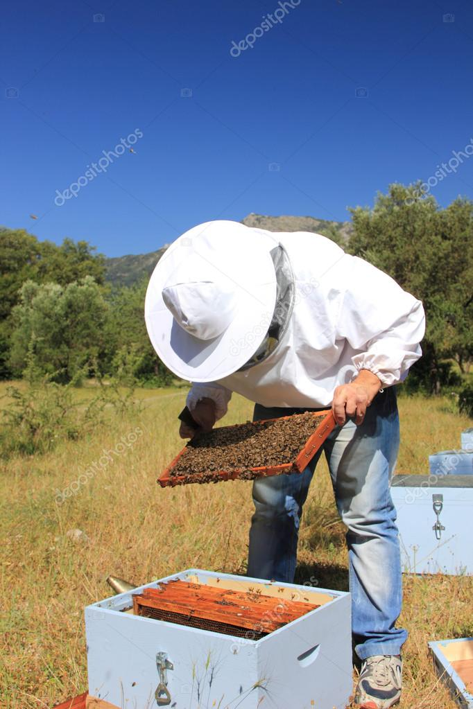 Bee keeper with bee colony — Stok fotoğraf #12316036