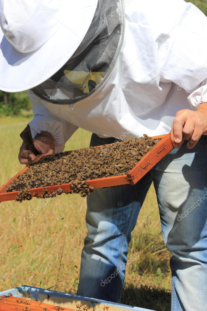 Bee keeper with bee colony — Stock Photo #12316037