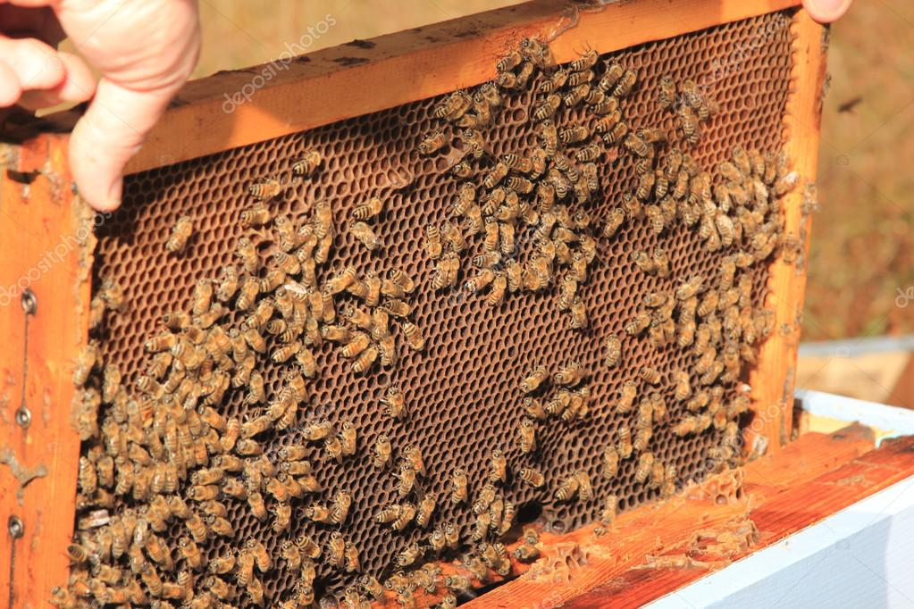 Bees inside the hive close up — Stock Photo #12316048