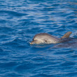 Stock Photo: Dolphin in sea