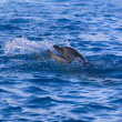 Dolphin in the sea — Stock Photo #15543823