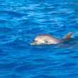 Stock fotografie: Dolphin at sea