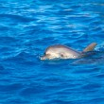 Dolphin at sea — Stock Photo