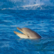 Stock Photo: Dolphin at sea