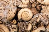 Seashells close up — Stock Photo