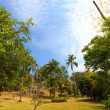 Beautiful tropical garden over blue sky - Stock Photo