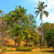 Beautiful tropical garden over blue sky - ストック写真