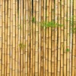 Beautiful Thai bamboo - Stock Photo