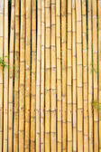 Beautiful Thai bamboo — Stock Photo