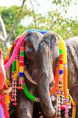 Elephants at the Phuket lighthouse — Stock Photo