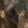 Asia elephant portrait - Stock Photo